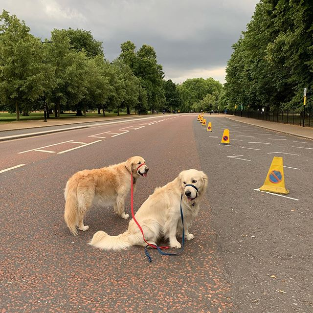 Road closed in Kensington Gardens/Hyde Park. So does that mean we own it?!