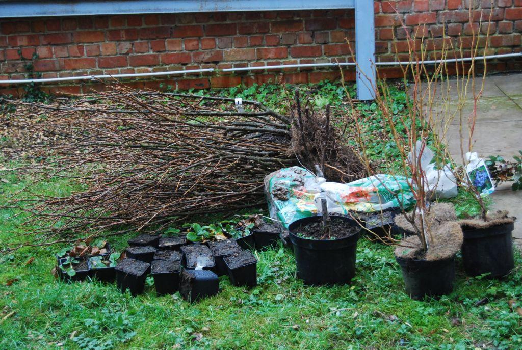 Arrivée des plantes en racines nues