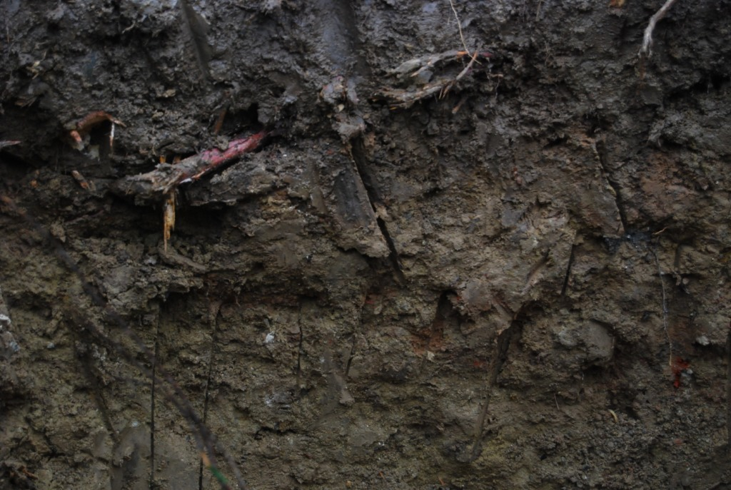 Décompactage des bords de la fosse de plantation