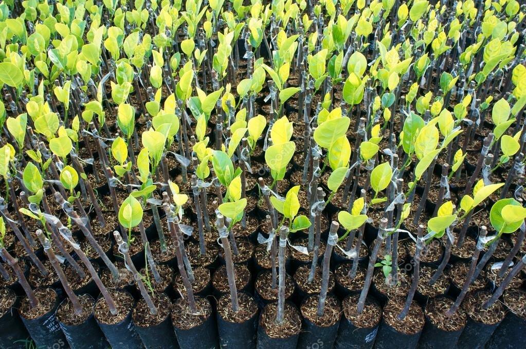 depositphotos_70884769-stock-photo-nursery-plant-nursery-garden-fruit.jpg