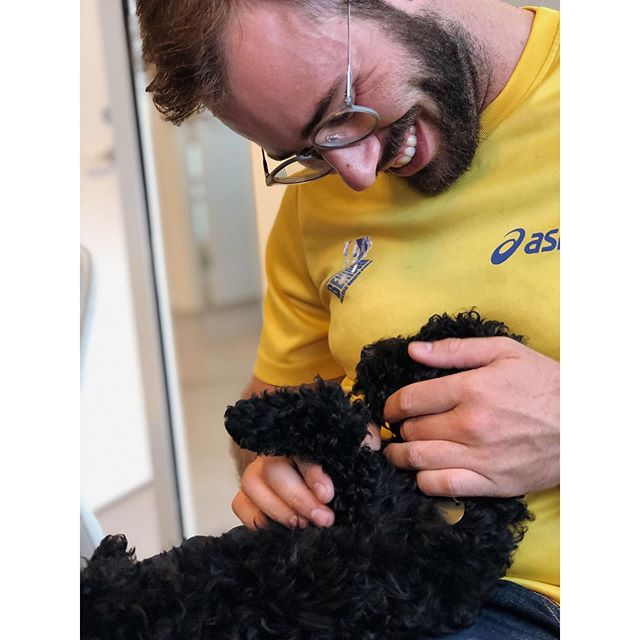 Say hello to Vera! �⠀ ⠀ Our colleague Mikkel got a new adorable furry family member, whom he also brought to the office. As you can see from the pictures - Vera fits perfectly into our team ��⠀ ⠀ #officedoglife #kontorhund #puppylove #instadog #dogatwork #dogstagram #dogsofinstagram #puppy #doggo #doggoislove #doggy #pet #puppies #poodle #poodlesofinstagram #poodlepuppy #instapets #instapetsgram