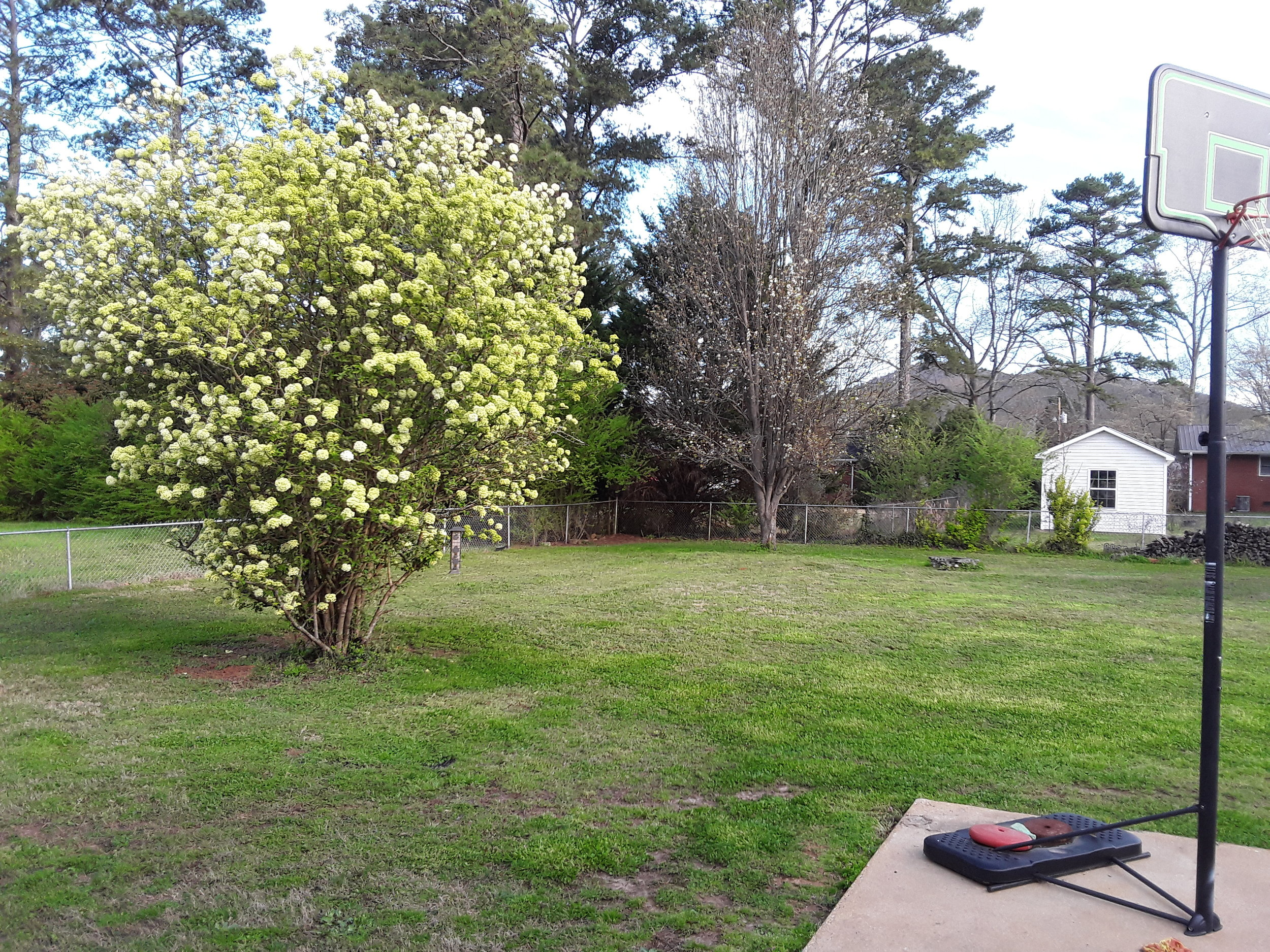 Between the grass Lou cut and our snowball bush, our yard is looking ready for spring!