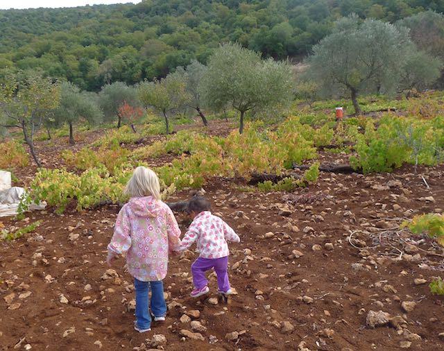 olive (3).jpg
