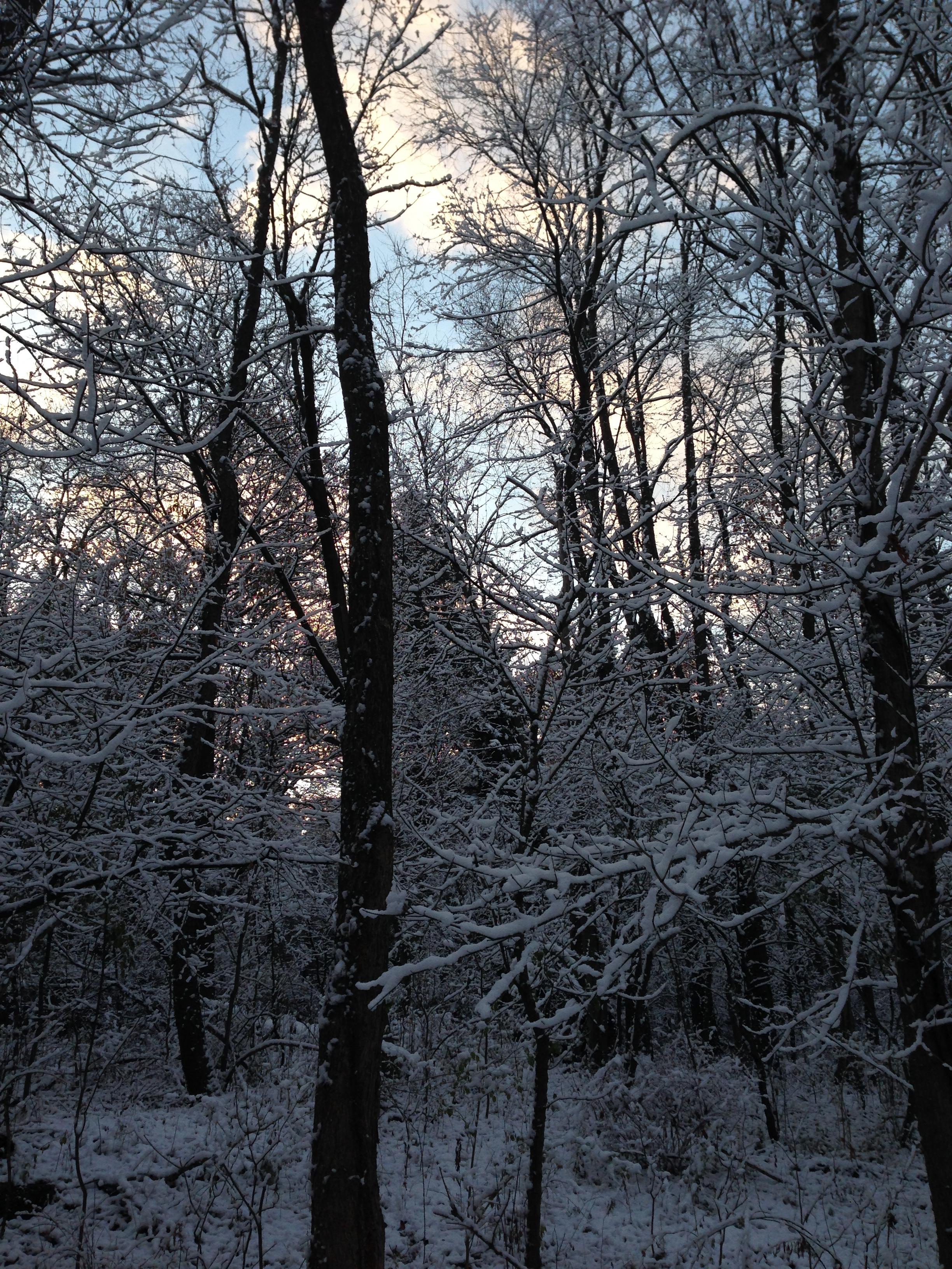 Snowy Sunrise. Photo by Carolyn.