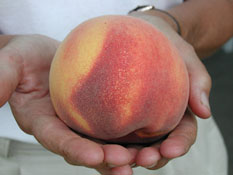 The fully-formed, delicious peach.