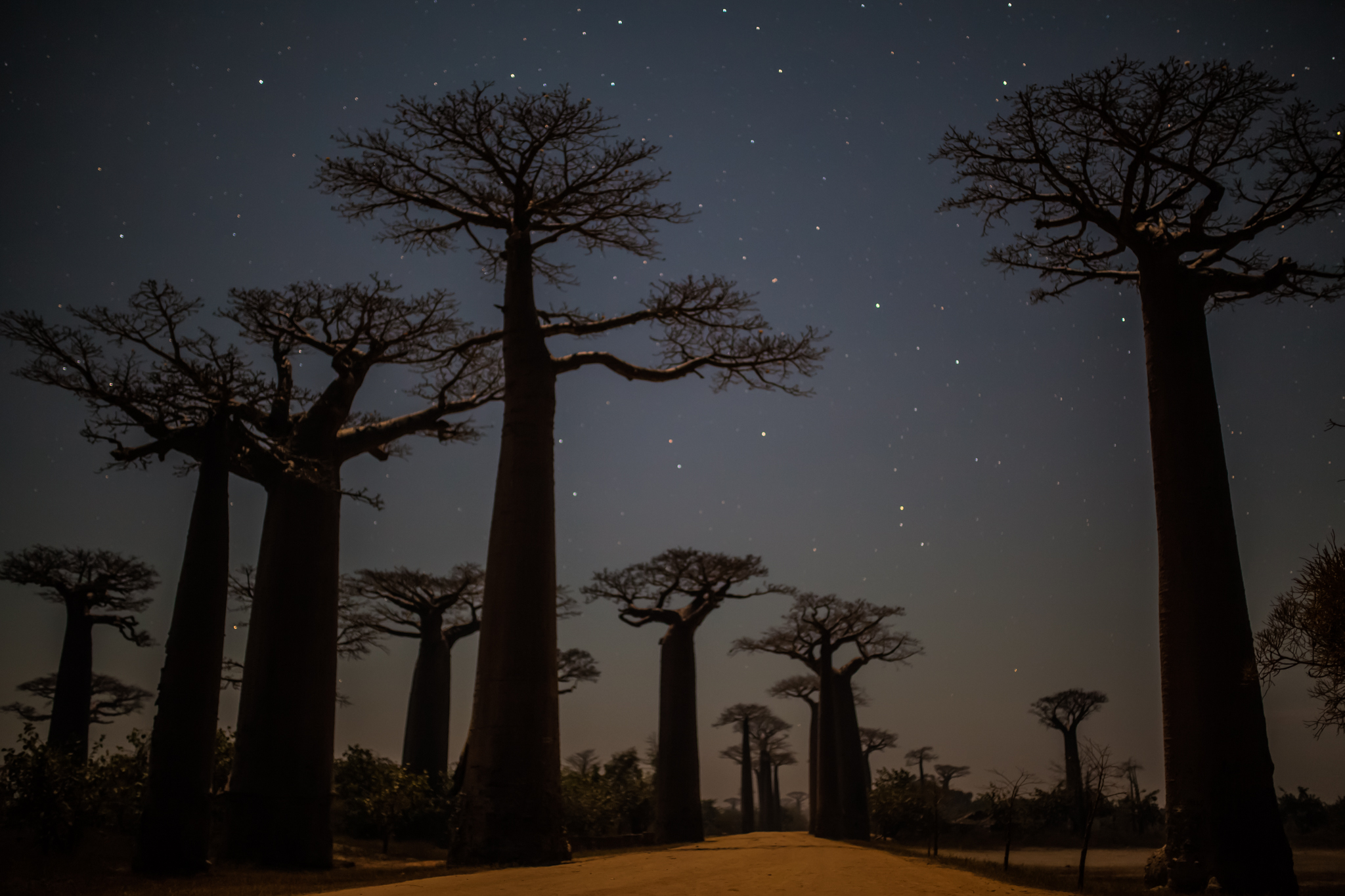 Once the Sunset Photos Have Been Taken the Tourists Drift Back to Morondava Leaving the Trees to their Silence. But there is more to Madagascar's most famous skyline than most appreciate