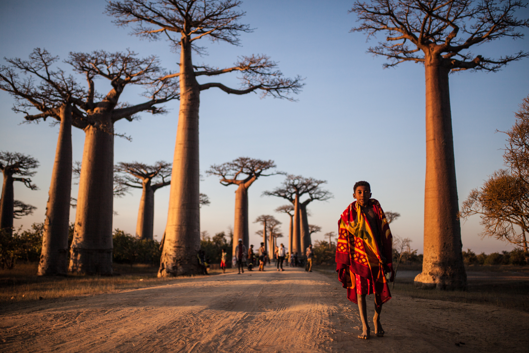 Close to the Coastal Town of Morondava, the Mighty Baobabs Lining the RN8 Have Become A Popular Tourist Attraction