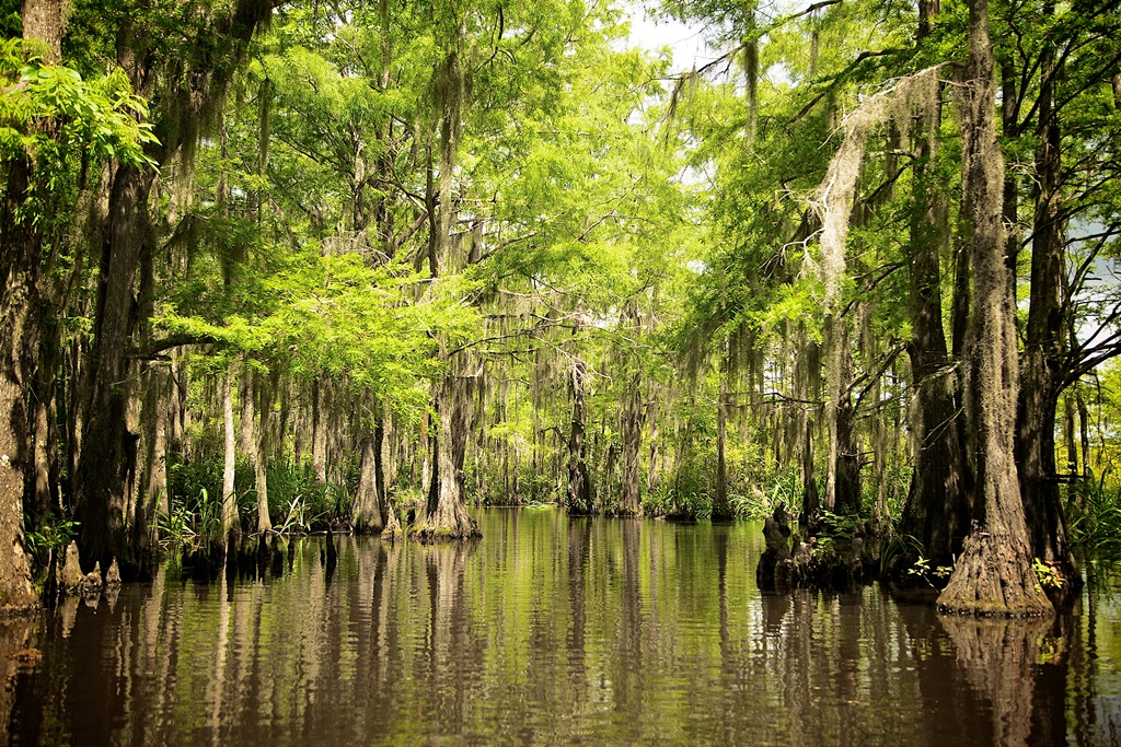 The pristine Honey Island Swamp ecosystem in St. Tammany Parish, Louisiana's Northshore.jpg