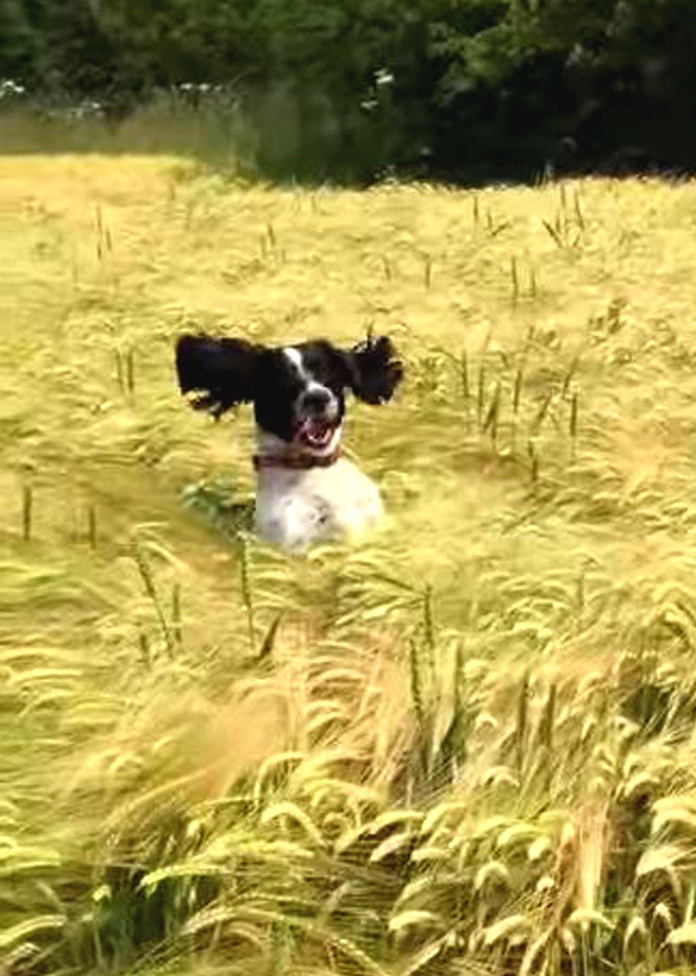 Dog-Grass.jpg
