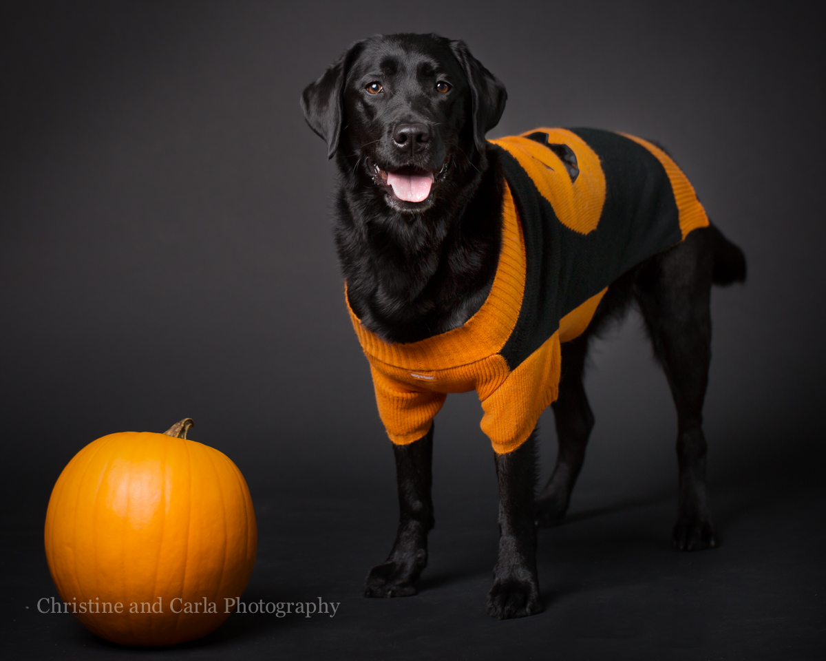 Meet Raven....our first Four-Legged Friend Howloween Photo Booth Star