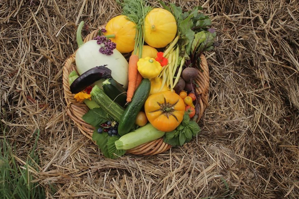 Order your vegie bag online -