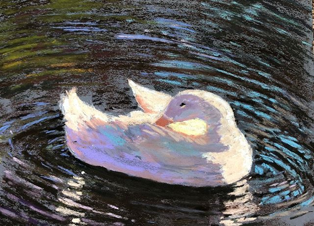 This painting above is something completely different for me - painting in the Quick Draw at Sonoma Plein Air is a fun challenge that has a 90 minute time limit - not easy but I was inspired by this duck and my Ducky (Sabrina) was there with me in spirit- this one I may want to keep for inspiration - but right now it's being shown at Bump in Sonoma - so honored to be painting for a good cause - The Arts in Schools all over Sonoma - so important in my life too! 🥰👩‍🎨🎨. @sonomapleinair @laskelly @huseskellygallery  #sonoma #pleinairmag #pleinairartist #lisaskellyfineart #duckylove #paintwhatyoulove #pastels #sennelierpastels #ampersandpastelbord #californiaartist