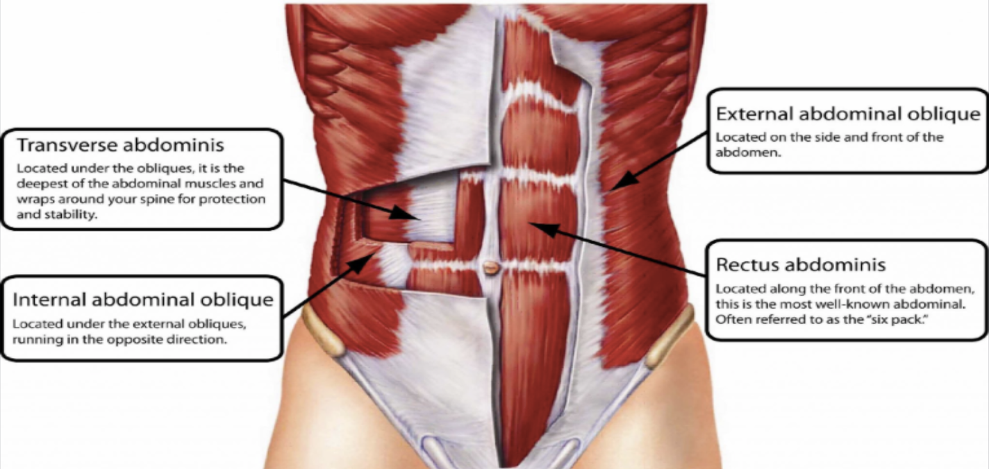 Transverse Abdominis: Increases intra-abdominal pressure, stabilize lumbopelvic region, increases fascial tension in the abodminals.