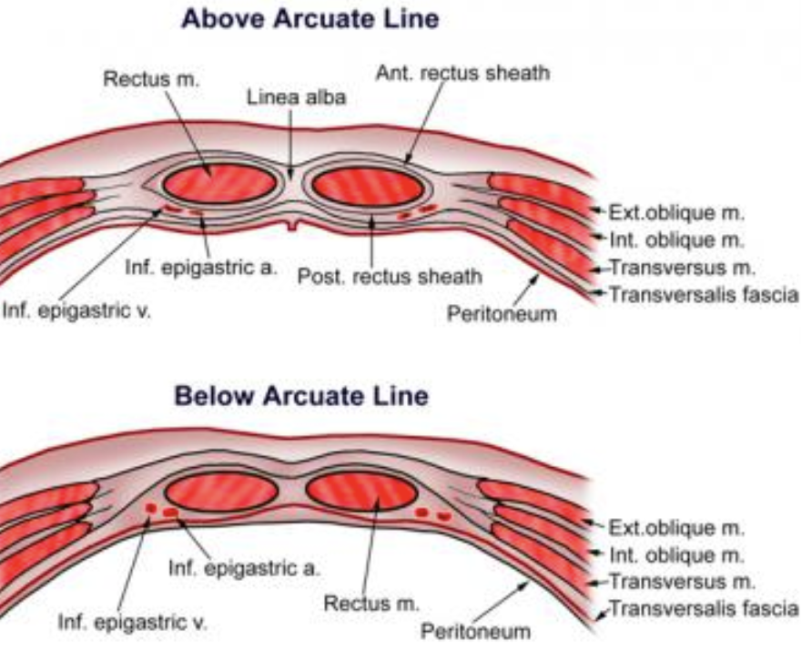 scar tissue and adhesion treatment