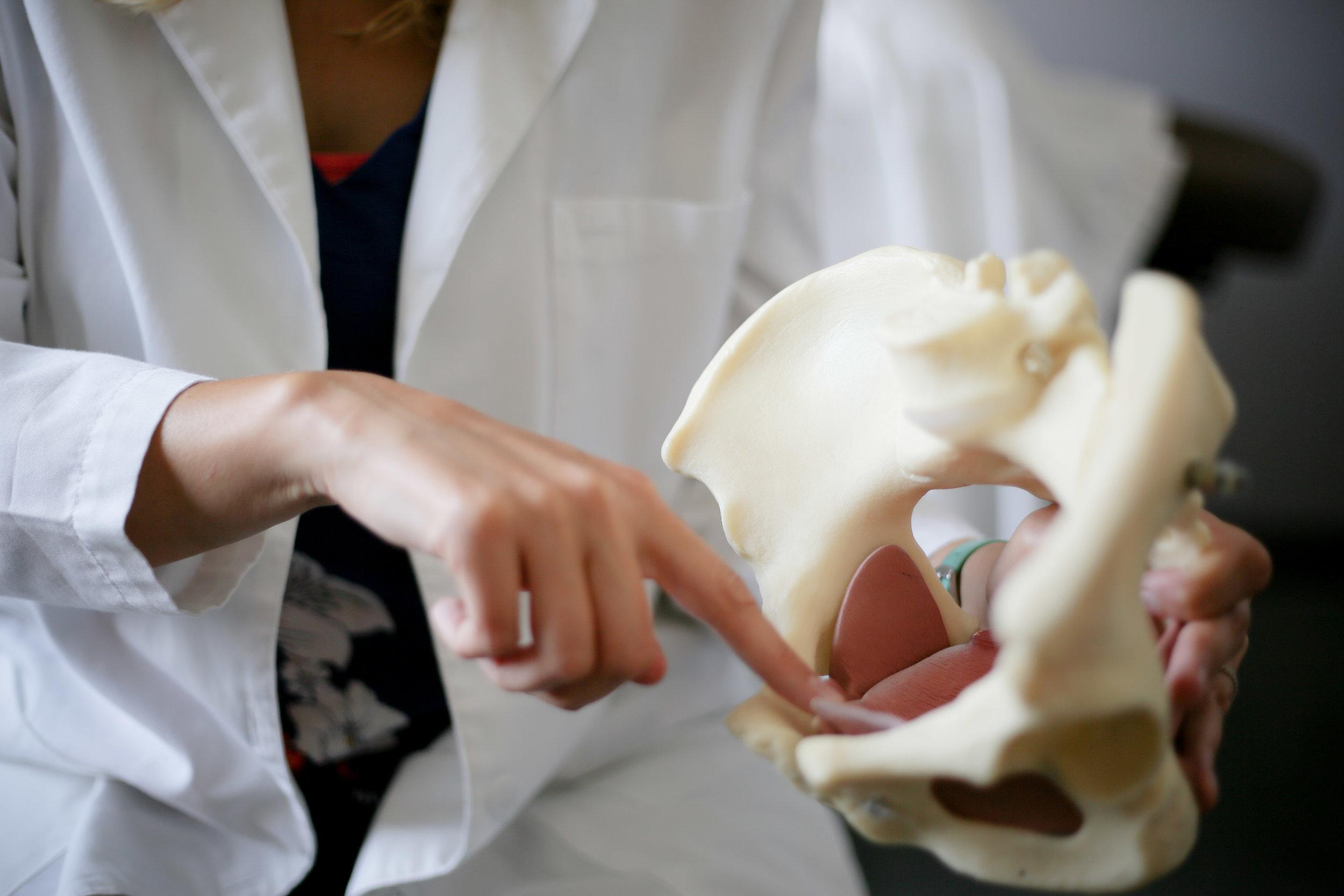 5 essential functions of the pelvic floor