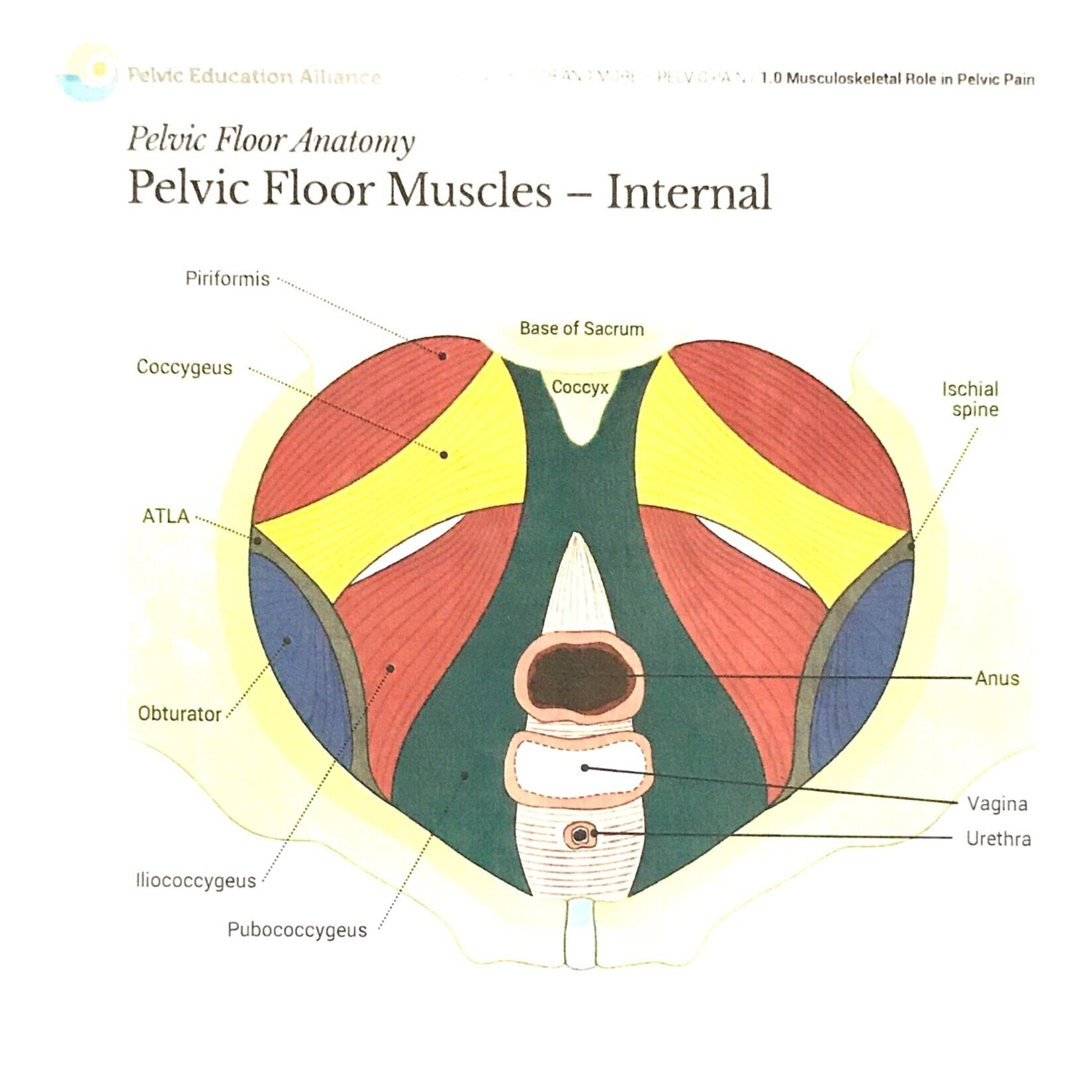 What is Pelvic Floor Physical Therapy