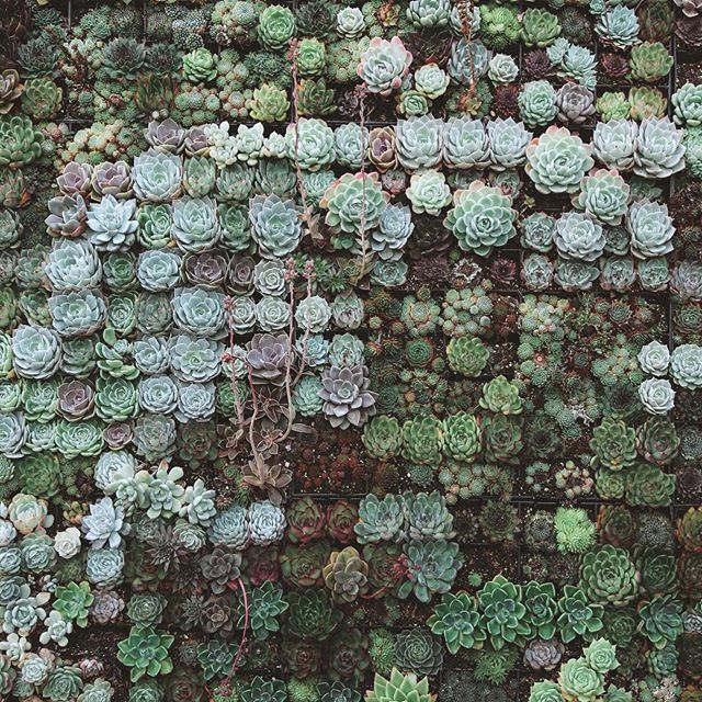 Yes, please. All the succulents. Mine. I mean, ours.