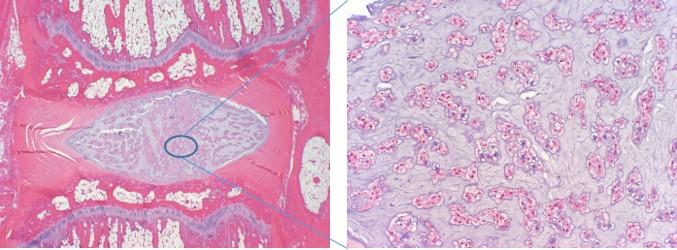 histology final.jpg