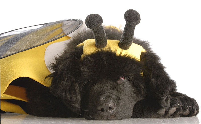 buzz dog medium.jpg