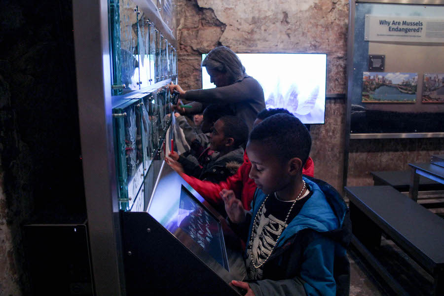 Digital and traditional media exist side by side in the Mussel Hatchery, where students take turns drawing native animals from glass diagrams and exploring verbal information on touch screens.