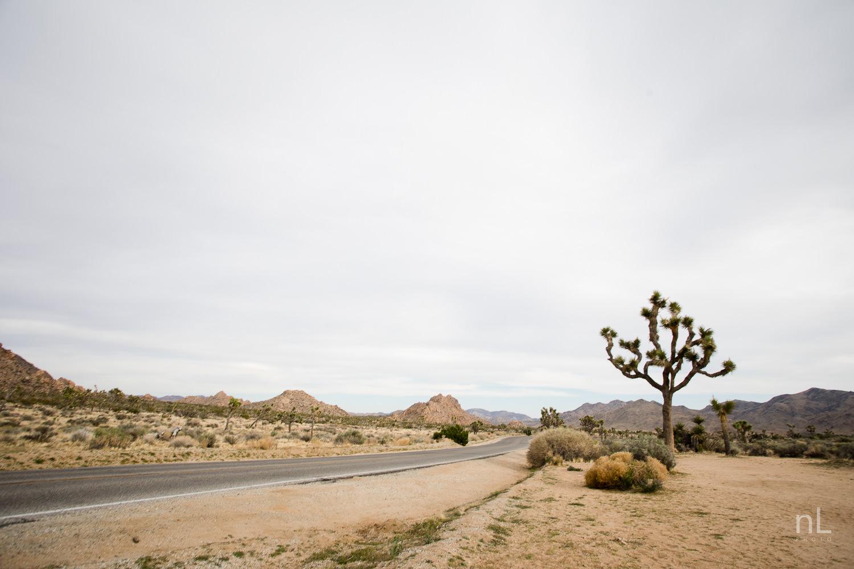 joshua-tree-engagement-wedding-elopement-photography-stylized-photoshoot-landscape-road-scene