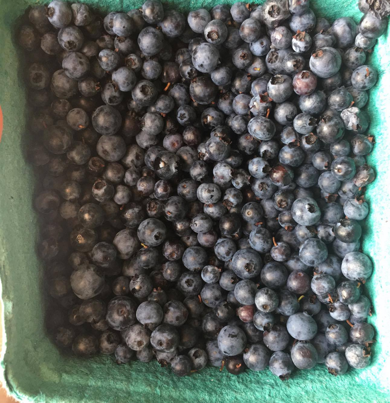 WILD BLUEBERRIES FROM THE MAGICAL WILD FOREST