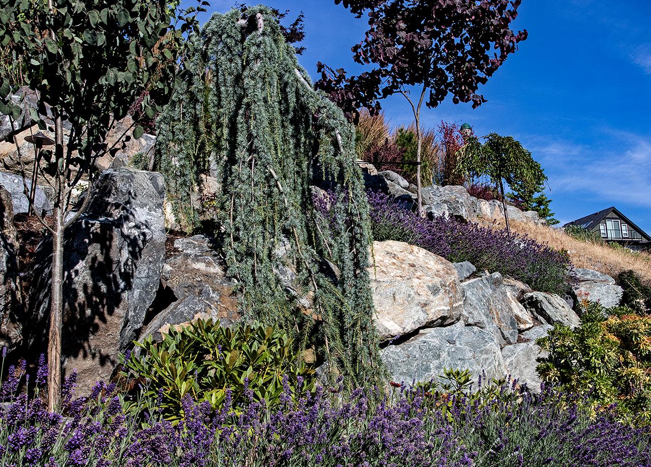 Cliffside garden-MustangLandscape-Victoria-BC-garden-10-shrubs.jpg