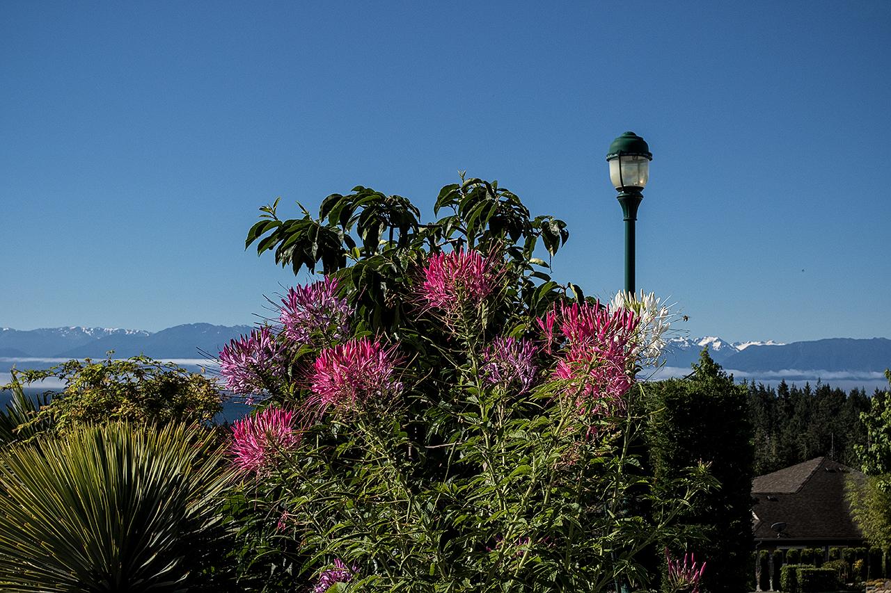 Cliffside garden-MustangLandscape-Victoria-BC-garden-12.jpg