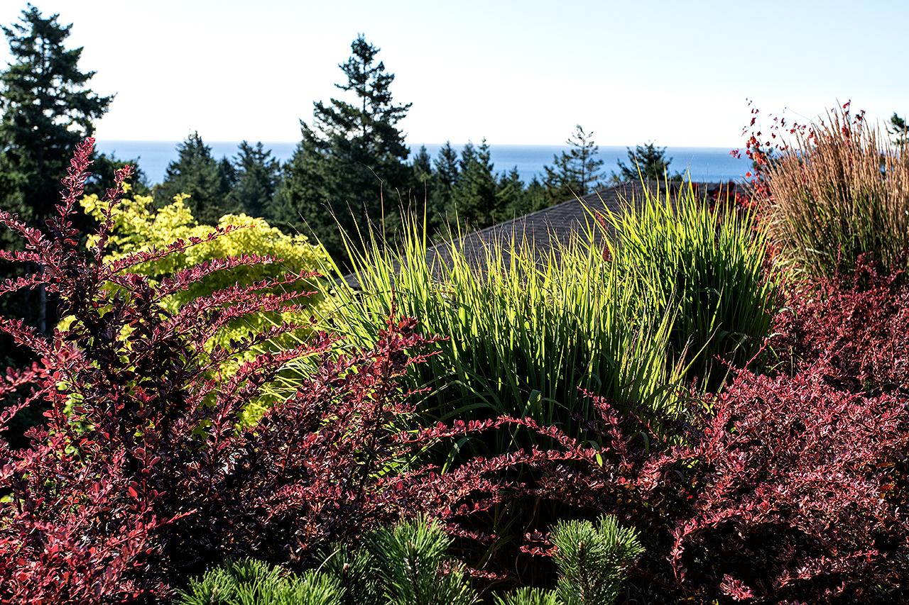 Cliffside garden-MustangLandscape-Victoria-BC-shrubbery.jpg