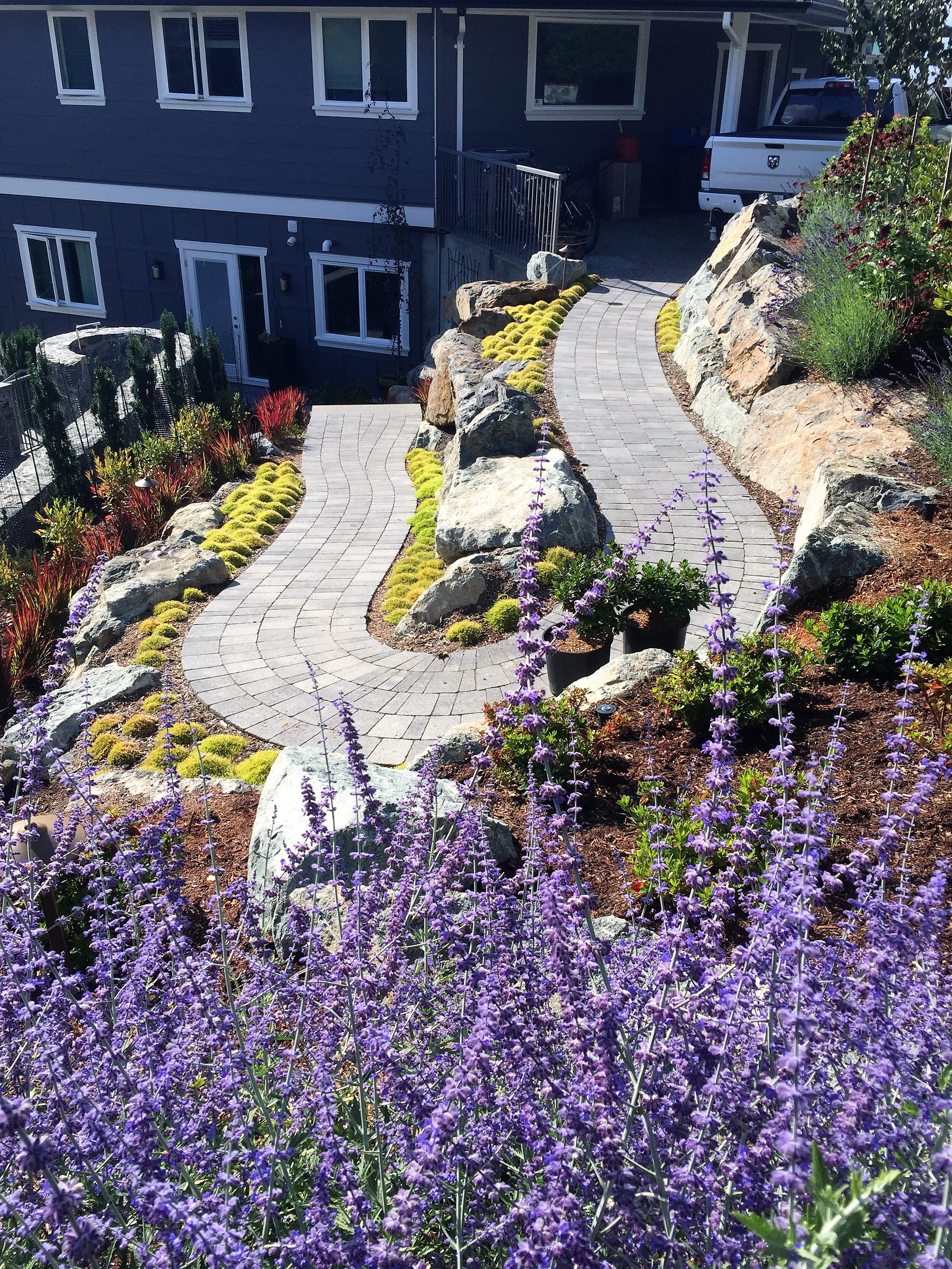 MustangLandscape-BC-Victoria-Garden-Russian Sage- winding pathway (2).jpg