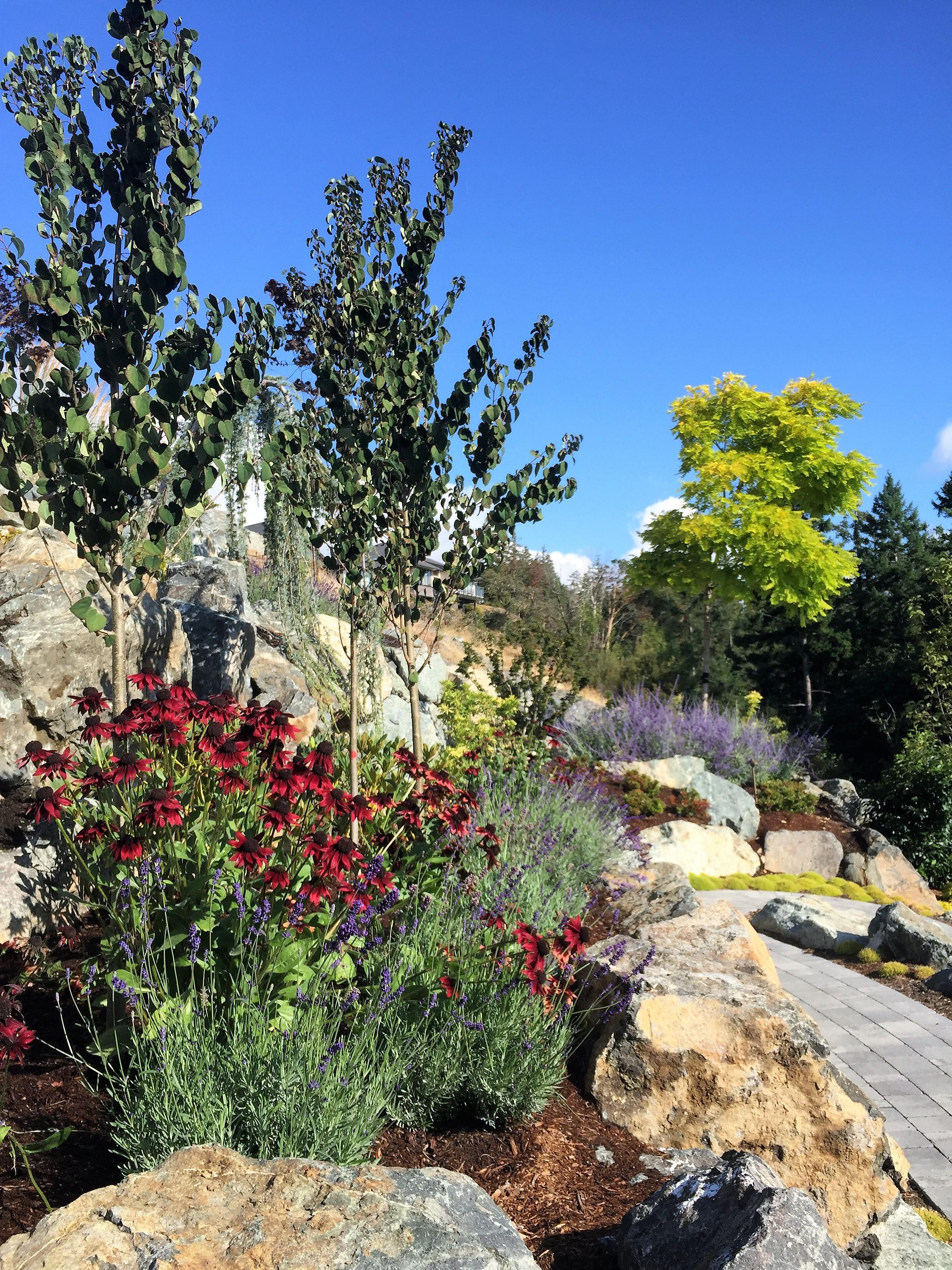 MustangLandscape-BC-Victoria-Garden-rockwall-rudbeckia-boulderwall.jpg