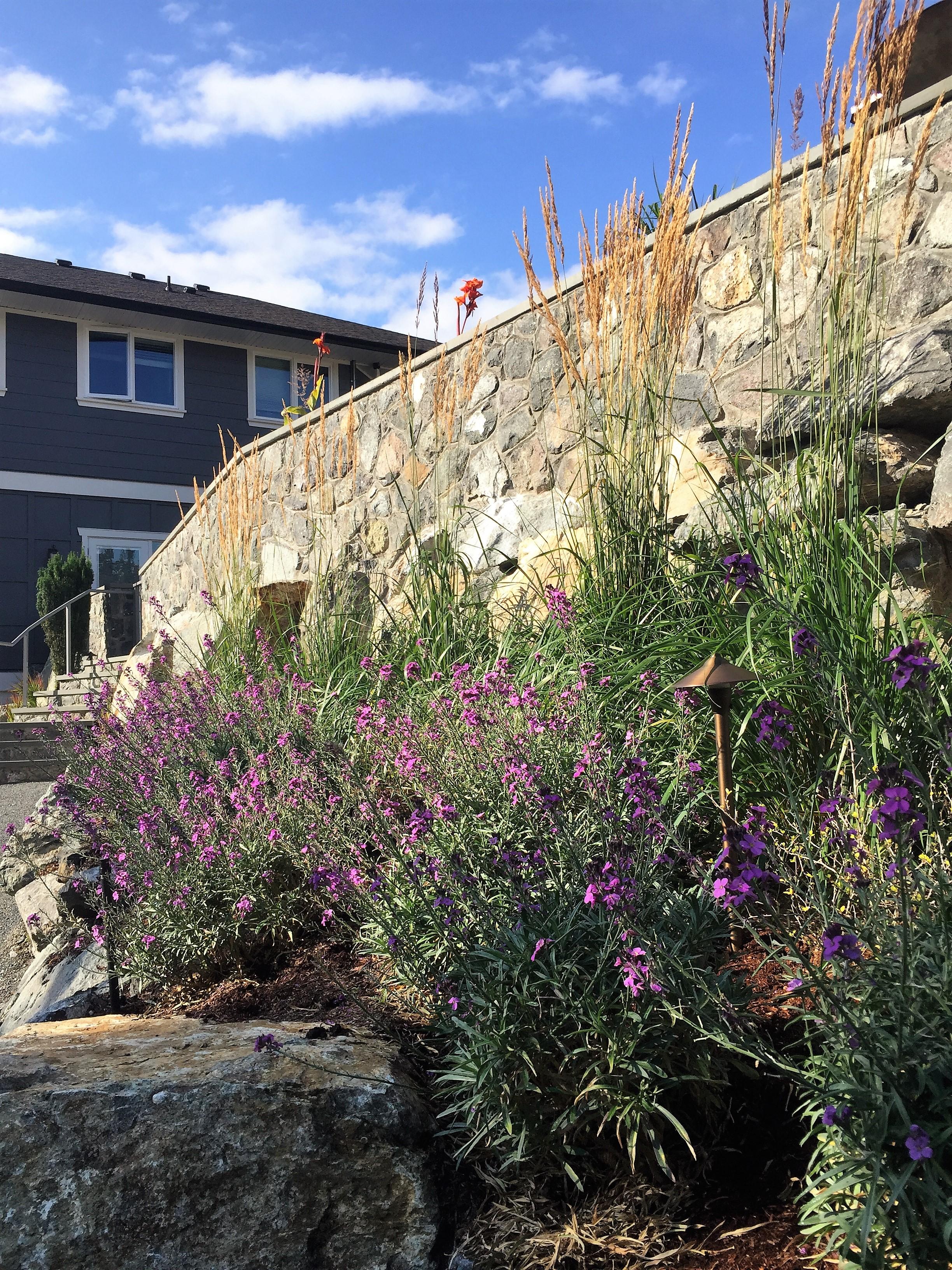 MustangLandscape-BC-Victoria-Garden-retainingwall-grasses-wallflower.jpg