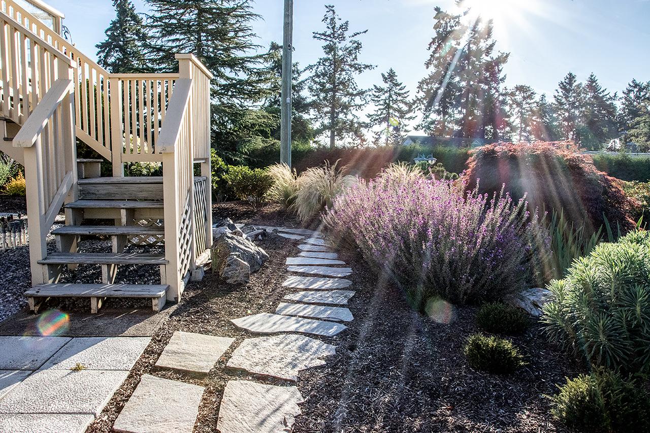 Beachside-Perennials-grasses--MustangLandscape-Victoria-BC-garden-8.jpg