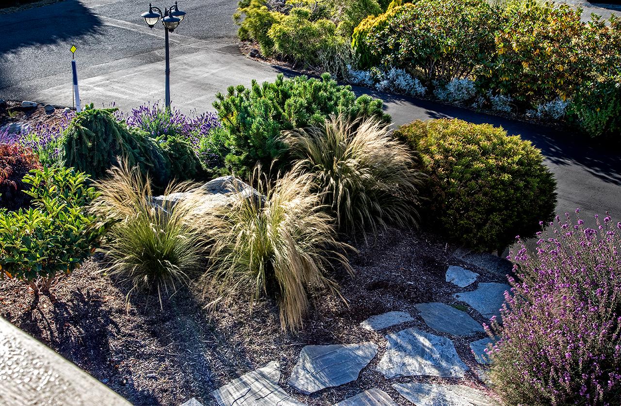 Beachside-Perennials-grasses--MustangLandscape-Victoria-BC-garden-9.jpg