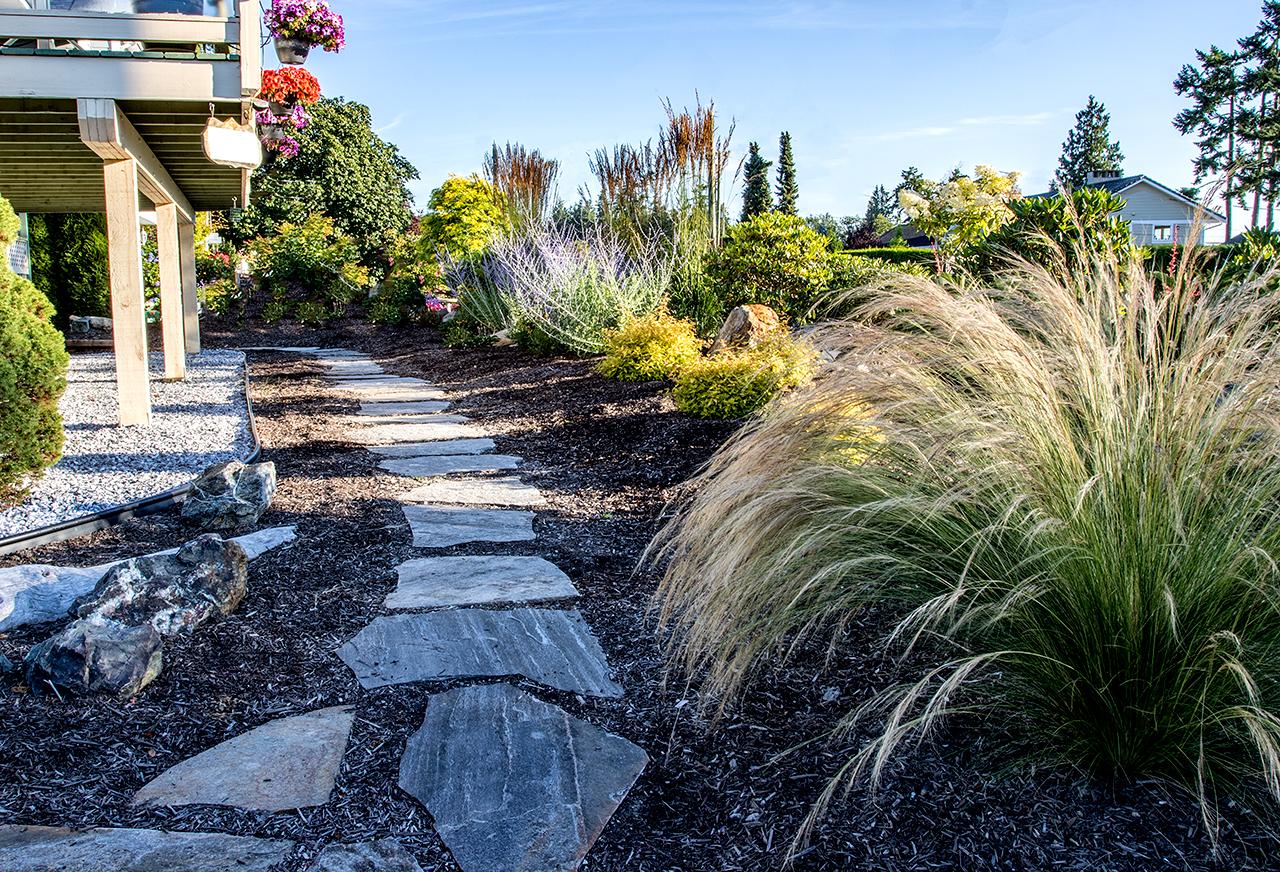 Beachside-Perennials-grasses--MustangLandscape-Victoria-BC-garden.jpg