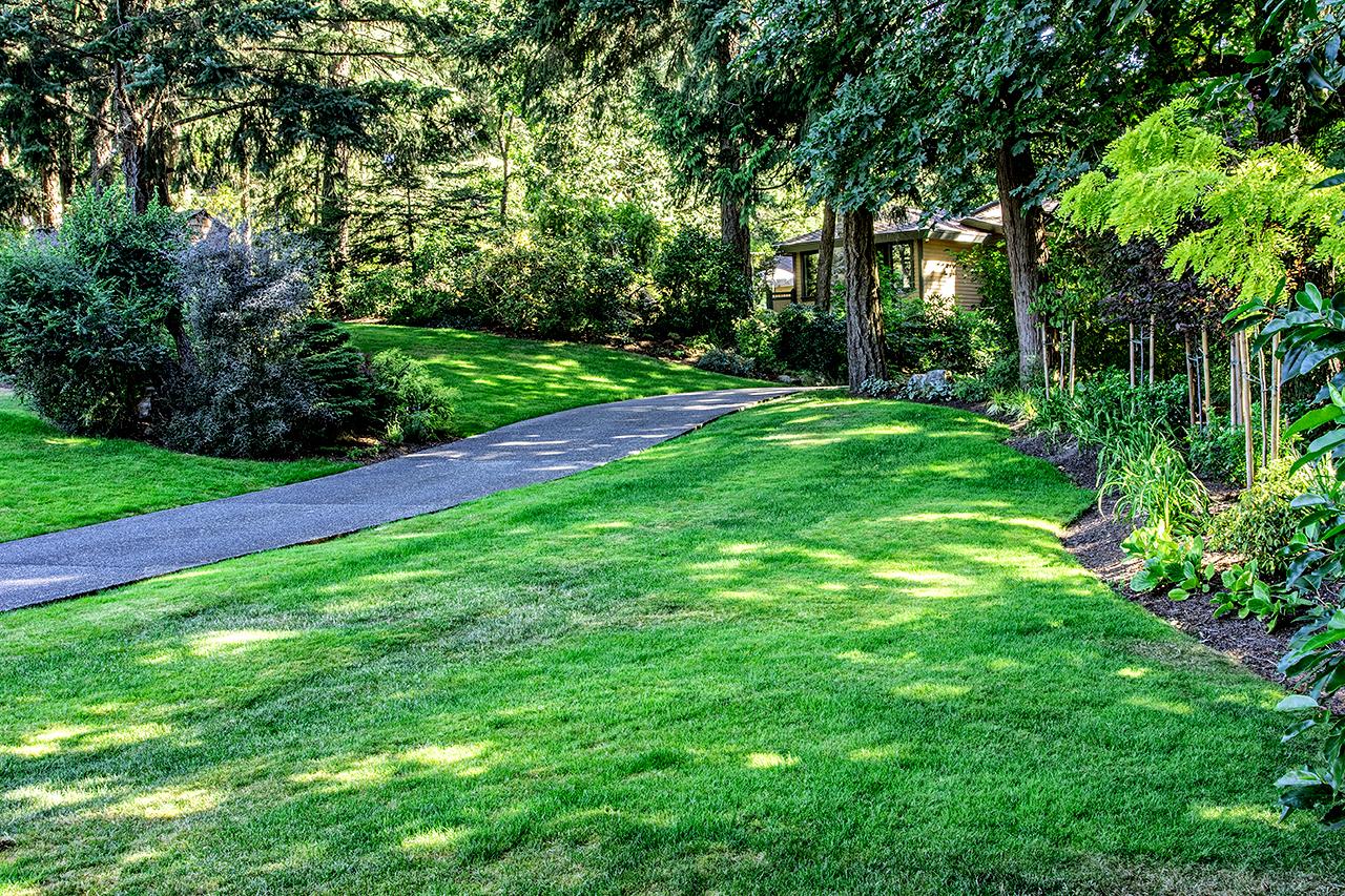 Woodland garden-MustangLandscape-Victoria-BC-garden-green.jpg