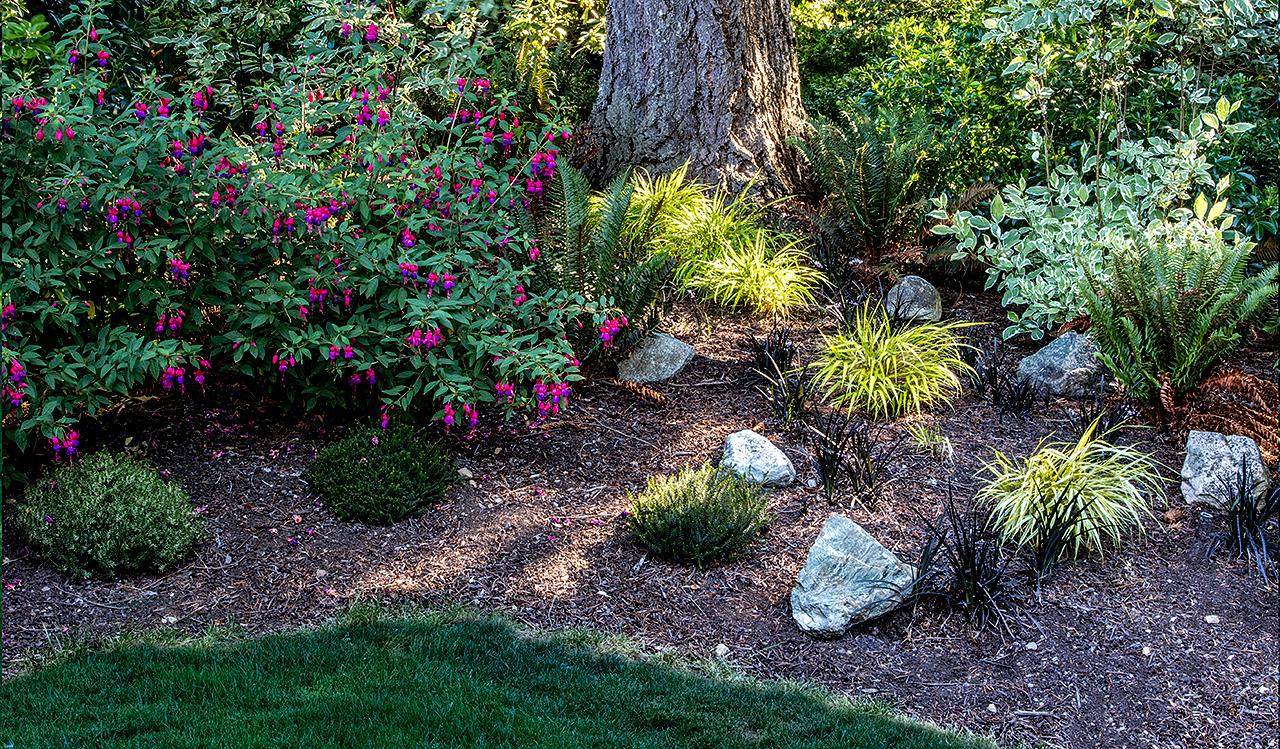 Woodland garden-MustangLandscape-Victoria-BC-garden-rock-flowers.jpg