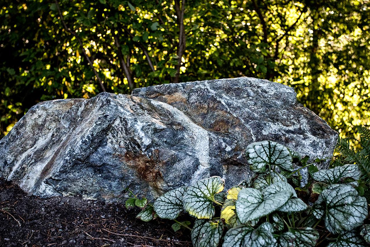 Woodland garden-MustangLandscape-Victoria-BC-garden-rock-plant (1).jpg