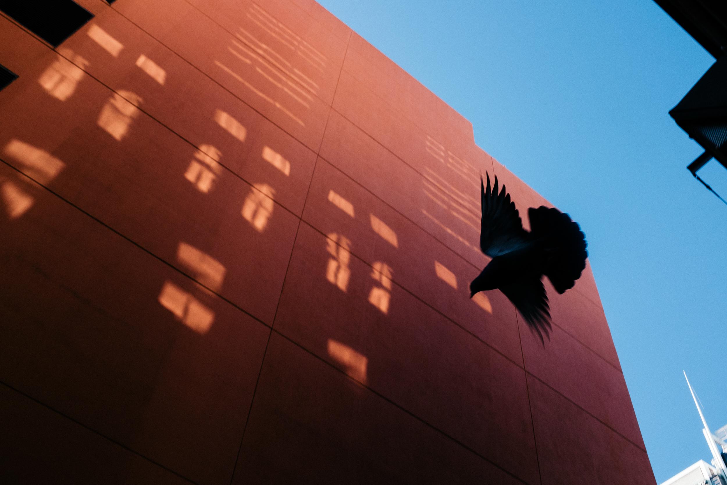 06_Jonathan_Pui_Australian_street_photography_pidgeon_reflective_light_aussie_street.JPG