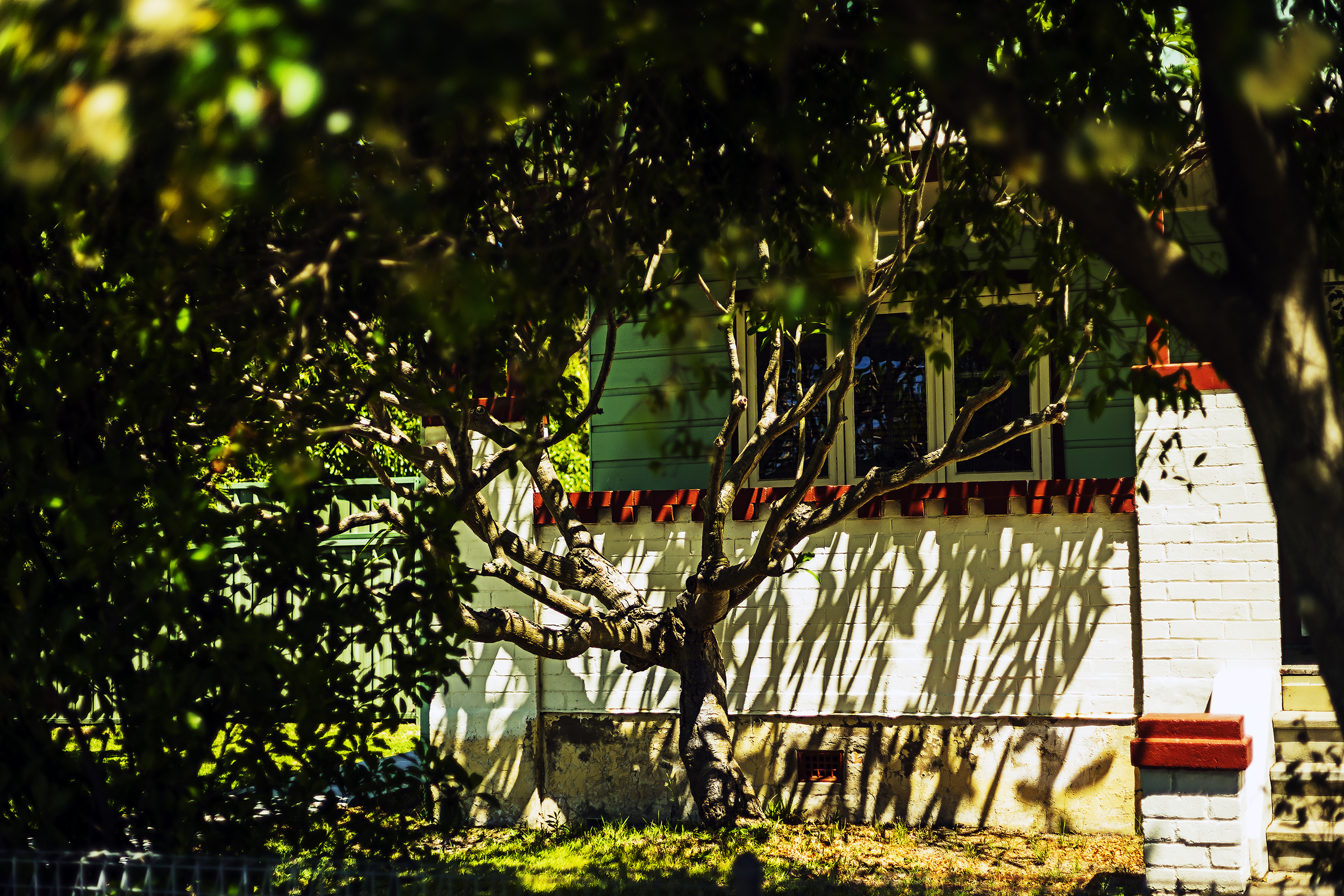 005_didi-s_gilson_australian_street_photography_kurrikurri_tree_house-sunlight_shadows_2018.jpg