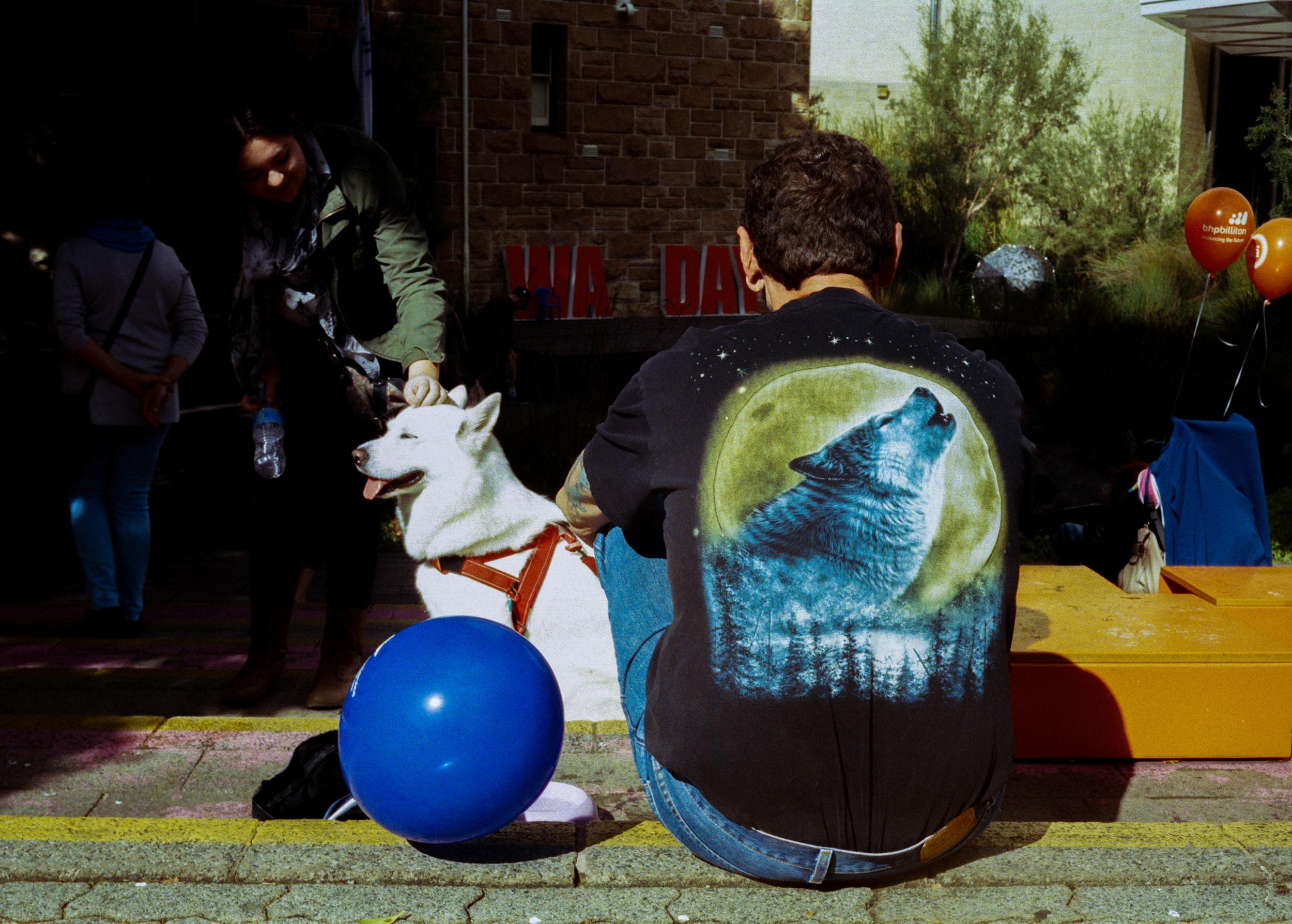 justin_tan_torres_australian_street_photography_dog_wolf_WA_day_2014_03.jpg