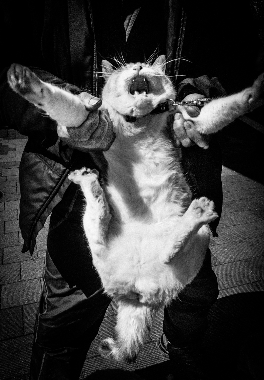 cat_LR.jpg