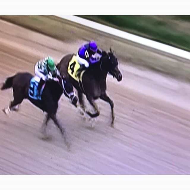 Great picture of Babaknowsevrything winning the 6th race at Churchill Downs today!! Three starts and two wins make a great Churchill meet and on to the Fairgrounds!!