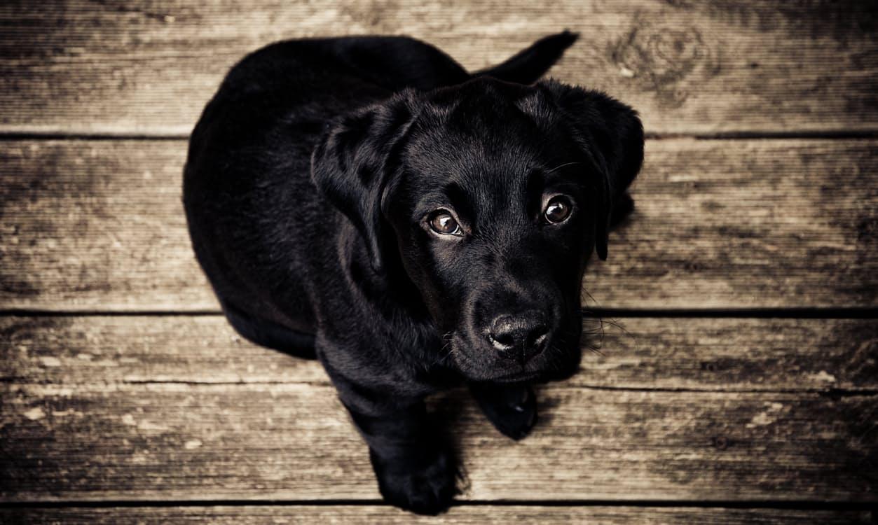 wood-animal-dog-pet.jpg