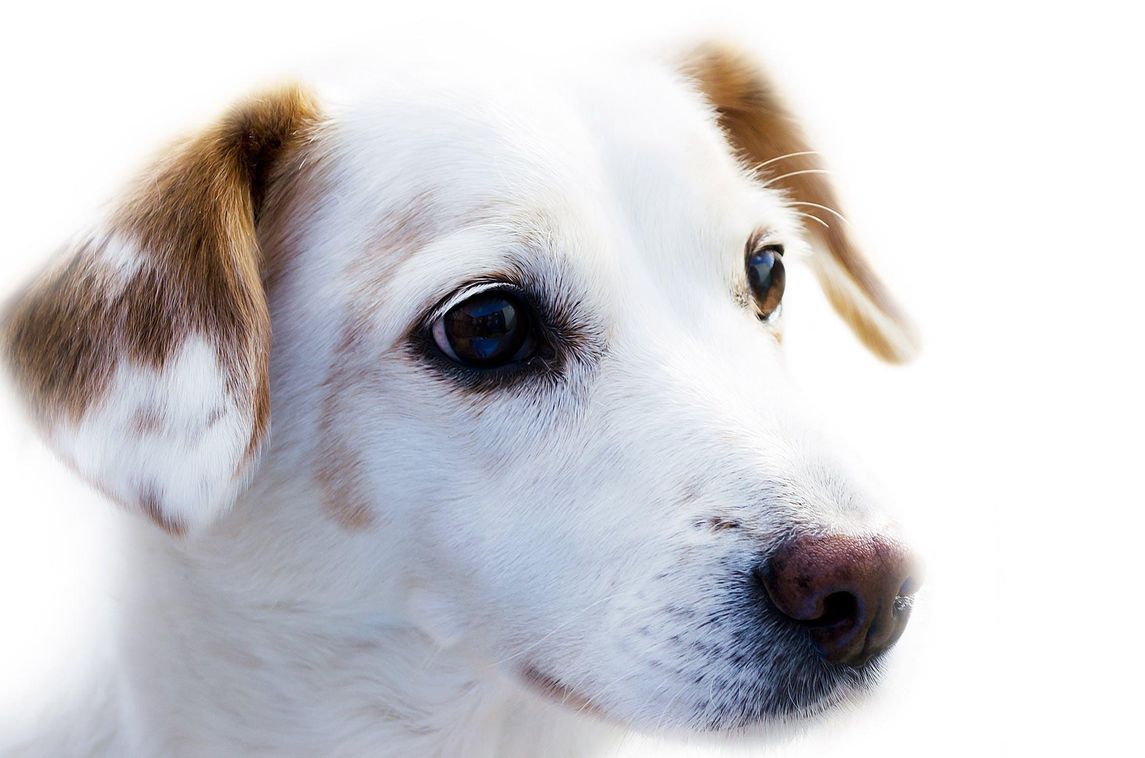 dog-animal-friend-loyalty-67304.jpeg