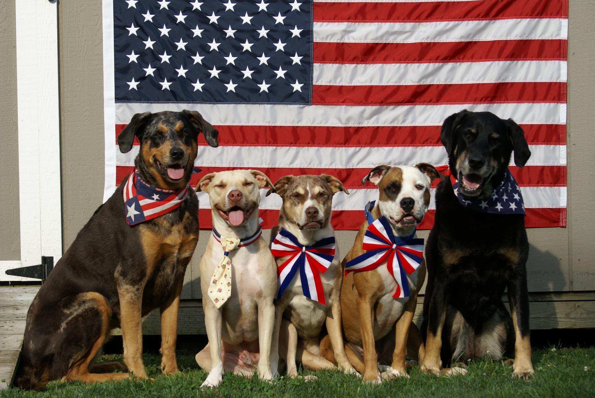 4th of july dogs.jpg