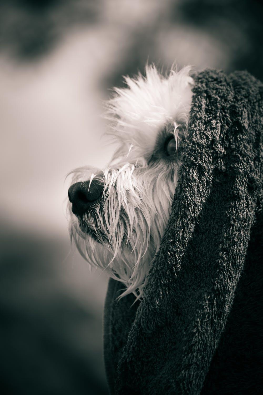 rainy day dog.jpeg