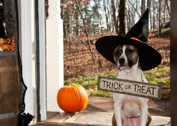 3. Teach 'em a Halloween trick for a treat.