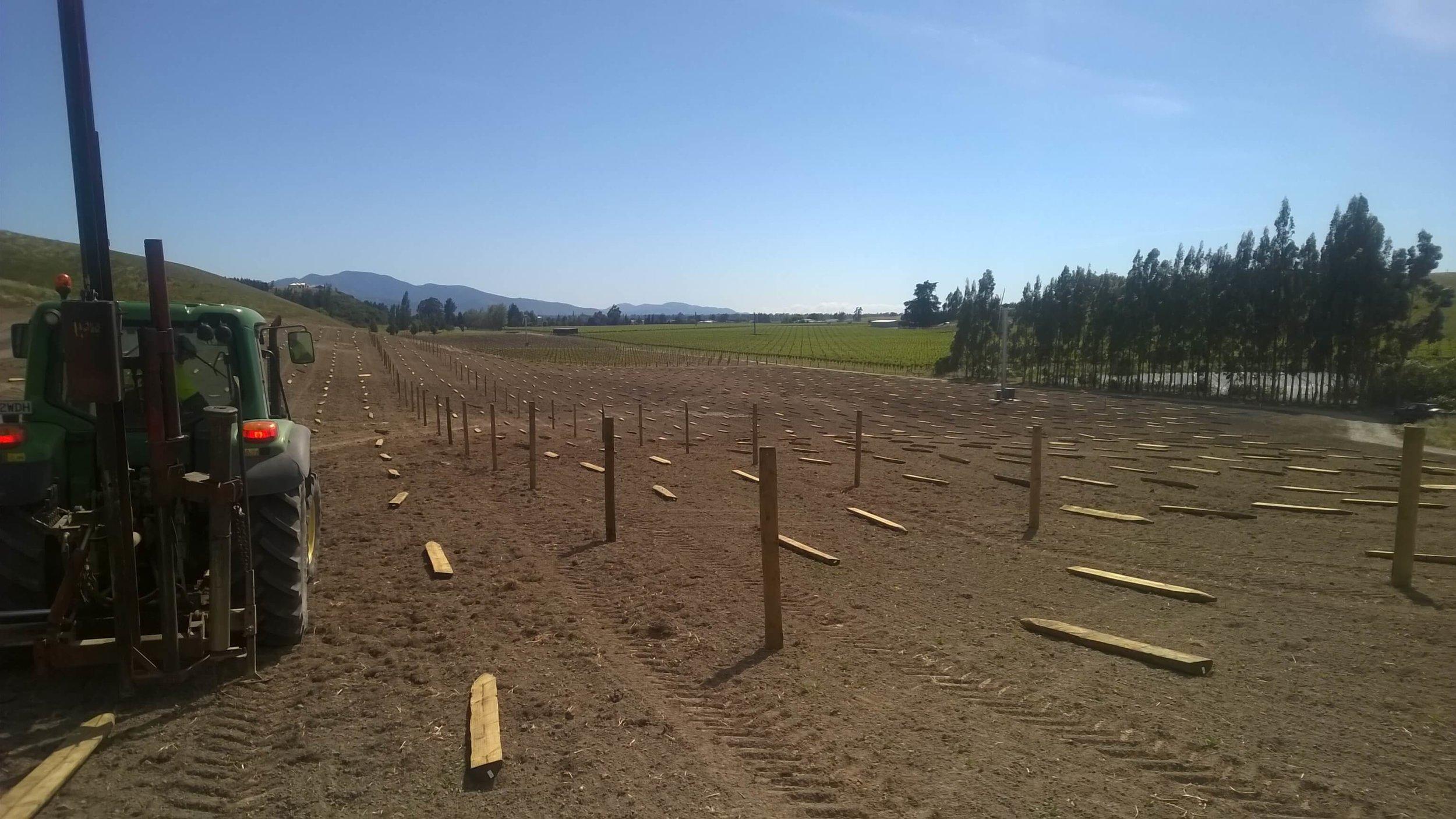 Vineyard fencing by Blackmore Fencing.