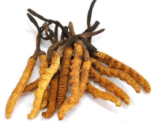 Tibet-Local-Specialties-Luxury-Tibet-Cordyceps-Sinensis-Caterpillar-Fungus-Winterworm-Summerherb-8-roots.jpg